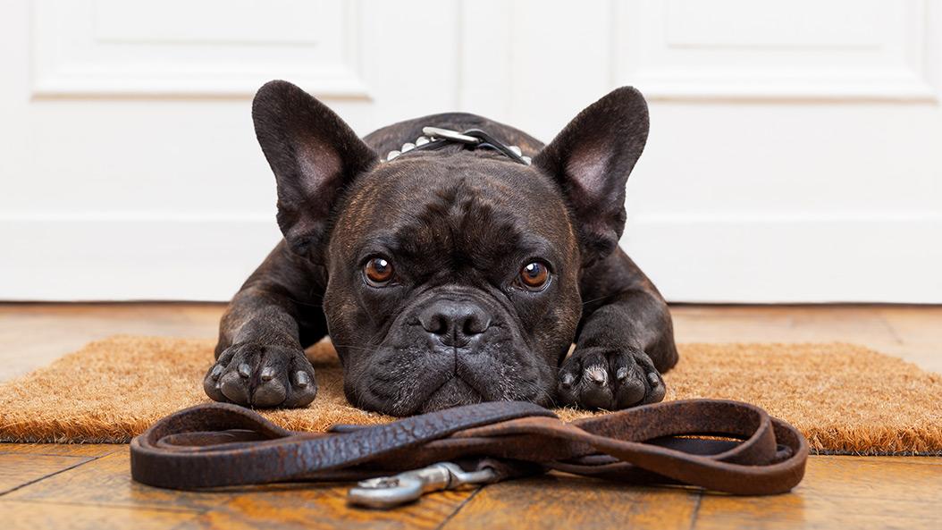Hundebesitzer wollen Leinenpflicht abschaffen