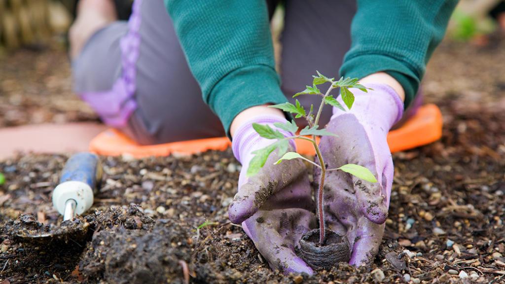 Mehr Grün für die Stadt - neuer Garten in Frankfurt eröffnet